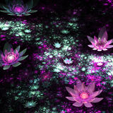 Colorful fractal flowers in dark Stock Images