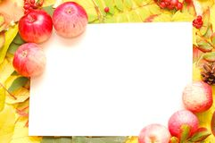 Colorful frame of apples Royalty Free Stock Image