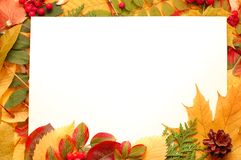 Colorful frame of fallen autumn leaves Royalty Free Stock Image