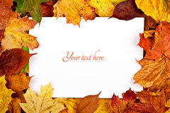 Colorful frame of fallen autumn leaves with text Stock Photos
