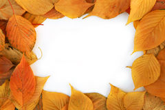 Colorful frame of fallen   leaves Stock Photos