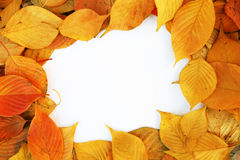 Colorful frame of fallen   leaves Royalty Free Stock Photography