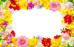 Colorful frame of spring flowers Royalty Free Stock Image