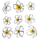 Colorful Frangiapani flowers Set on background. Vector Royalty Free Stock Images