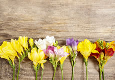 Colorful freesia flowers on wooden background Royalty Free Stock Images