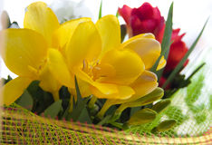 Colorful freesias in wrap. Bouquet of some colorful freesias in wrap royalty free stock photography