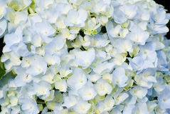 Colorful fresh flower background Stock Photography