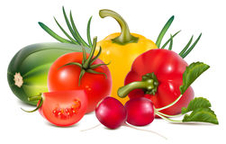 Colorful fresh group of vegetables. Stock Photos