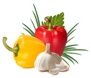 Colorful fresh group of vegetables. Stock Images