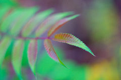 Colorful fresh leaf Stock Images