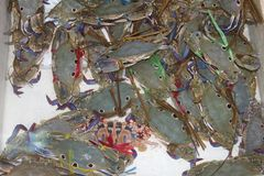 Colorful fresh life crabs in the water, China Royalty Free Stock Photos