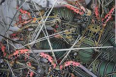 Colorful fresh live lobsters in a water basin , Hong Kong. Colorful fresh live lobstesr are waiting to be eaten in a water basin of a restaurant stock images