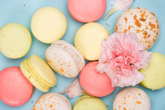 Colorful fresh macarons background with pink flower Stock Photos