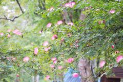 Colorful fresh park flower pinks blooming morning garden many tree colorful amazing green landscape white color Stock Photo