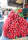 Colorful fresh red radishes and cucumbers on market stall in Belgrade, Serbia Royalty Free Stock Photos