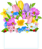 Colorful Fresh Spring Flowers. Forming a seasonal border   above a blank sign with copy space Stock Images