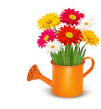 Colorful fresh spring flowers in orange watering c Royalty Free Stock Image