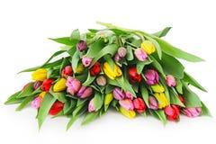 Spring tulip flowers Stock Photo