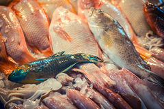 Colorful fresh tropical reef fish in the market, Thailand. Stock Photography