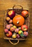 Plums Mirabelles red yellow green apples orange pumpkin in wicker basket on aged wood background. Thanksgiving autumn fall harvest Stock Images