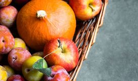Free Colorful Freshly Picked Plums Mirabelles Red Yellow Green Apples Pumpkin In Wicker Basket Grey Stone Background. Thanksgiving Royalty Free Stock Images - 125942219