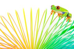 Colorful frog Royalty Free Stock Image