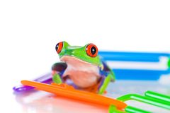 Colorful Frog in plastic paperclip pile Royalty Free Stock Photo