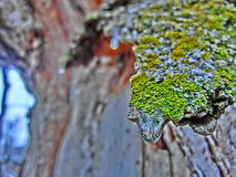 Colorful Frozen Bark Royalty Free Stock Photography