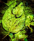Colorful frozen Fall leaves captured on ground, natures abstract. Royalty Free Stock Images