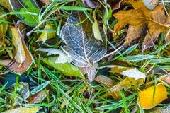 Colorful frozen Fall leaves captured on ground, natures abstract. Taken in Kentucky Royalty Free Stock Photo