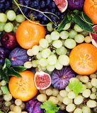 Colorful Fruit, Summer Food Background Stock Images