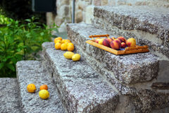 Colorful fruits from garden trees on the tray Stock Images