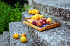 Colorful fruits from garden trees on the tray Royalty Free Stock Photo