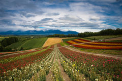 Colorful Furano Royalty Free Stock Photography