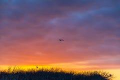 Colorful Galapagos Sunset Stock Photography