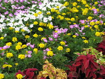 Colorful garden. Lots of flowers Royalty Free Stock Photo