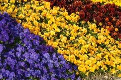 Colorful Garden Arrangement. This is the beautiful arranged castle garden of Spiez, in Switzerland Stock Photos