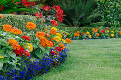 Colorful garden detail. A close, ground-level view of a beautiful garden display featuring a boxwood hedge skirted by small colorful zinnias and lobellia with Royalty Free Stock Images