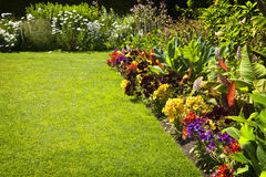 Free Colorful Garden Flowers Stock Photos - 19878733