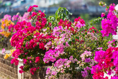 Colorful garden Royalty Free Stock Photography