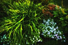colorful garden flowers with grass Royalty Free Stock Image