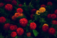 Colorful garden flowers with grass closeup Royalty Free Stock Photography