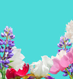 Colorful garden flowers on the sapphire background. Royalty Free Stock Photo