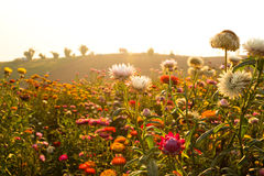 Colorful Garden Full With Flower Stock Images