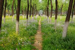 Woods and Flowers in Summer royalty free stock photography