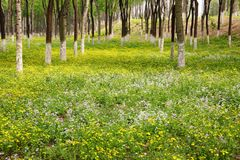Woods and Flowers in Summer stock photography
