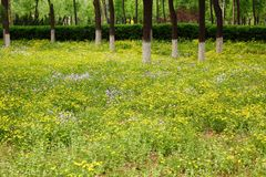 Woods and Flowers in Summer royalty free stock images