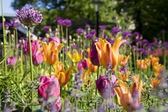 Colorful garden, Stockholm. Stock Photography