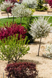 Colorful garden with trees. A small garden with trees in bloom by multiple colors Royalty Free Stock Images