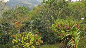 A colorful garden in the tropics. Of Panama stock video footage